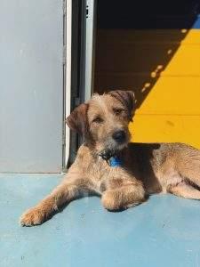 OKC Vet Campus Dog Boarding - happy dog enjoying the sun