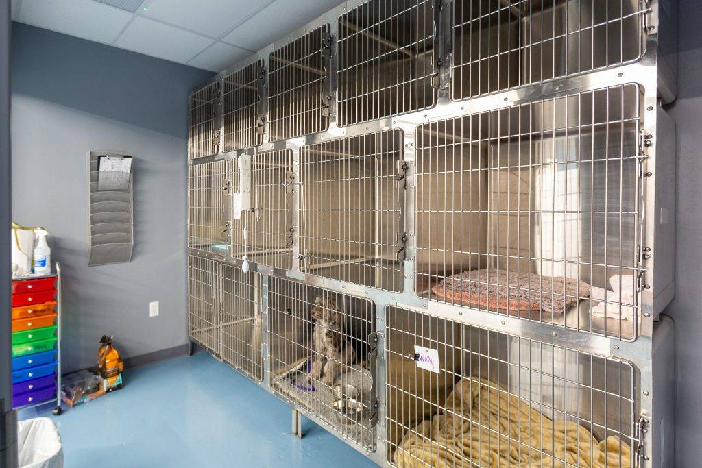 dog-boarding-grooming-vet-service-oklahoma-city-dog-boarding