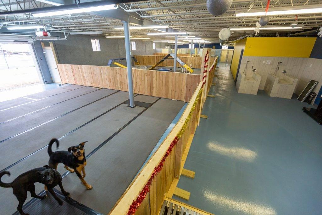 dog-boarding-grooming-vet-service-oklahoma-city-indoor-play-area